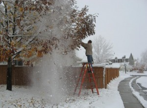 Hitting Tree Limbs to Remove Snow Out of Tree